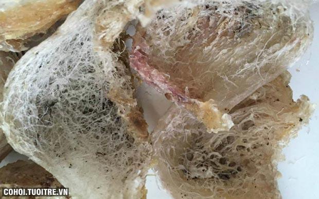Chuyên cung cấp yến đảo sạch lông và còn lông