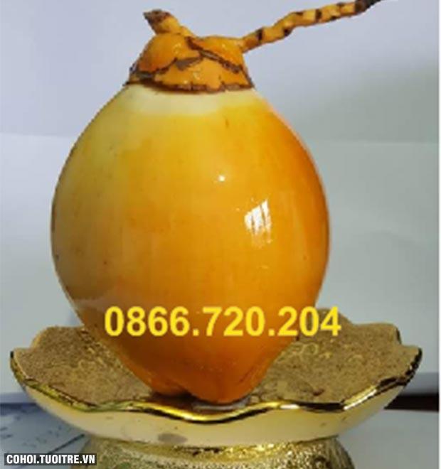 Trồng thành công giống dừa cho trái 2 màu