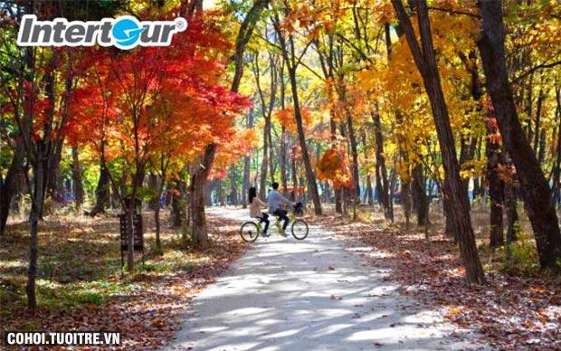 Trải nghiệm mùa thu Hàn Quốc đúng điệu chỉ 13,19 triệu