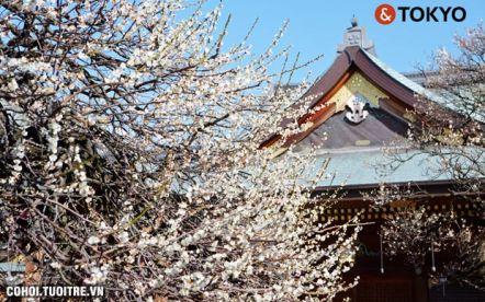 Khám phá Nhật Bản - Mùa hoa anh đào cùng TST Tourist