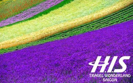 HOKKAIDO - Rực rỡ sắc hoa mùa hè 7N6Đ
