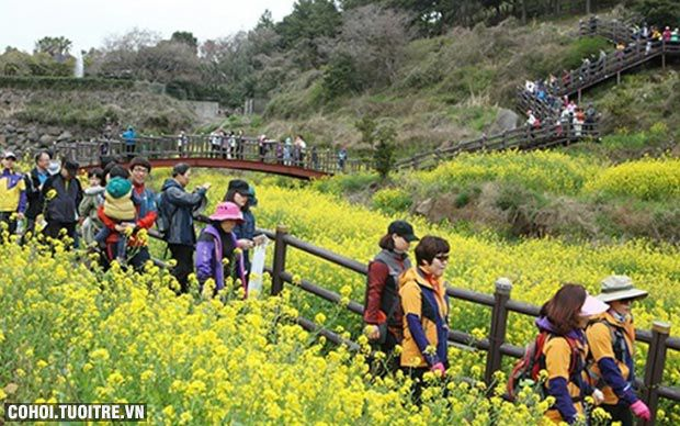 Tour charter đi Jeju Hàn Quốc chỉ 7,199 triệu