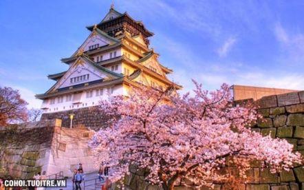 Du lịch mùa hoa anh đào Nhật Bản