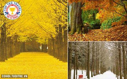 Du lịch mùa thu Hàn Quốc giá cực hấp dẫn