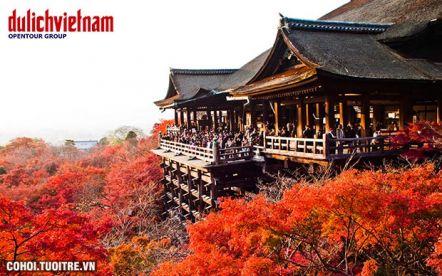 Tour mùa hoa anh đào Nhật Bản 6 ngày