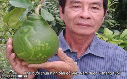 Bưởi in hình bản đồ Việt Nam - Hoàng Sa, Trường Sa