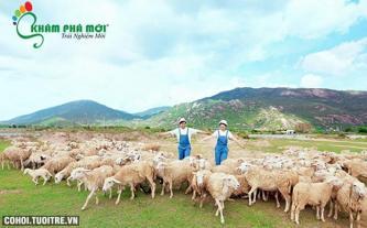 Biển Vũng Tàu, trải nghiệm nông trại cừu, vườn rau