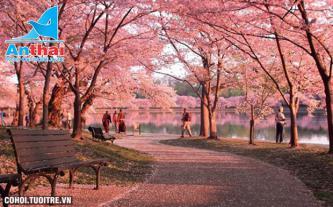 Khám phá Nhật Bản mùa hoa anh đào 6N5Đ