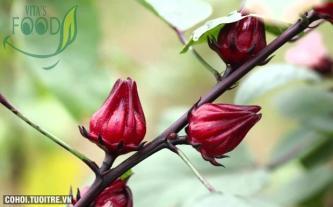Siro hoa Atiso đỏ