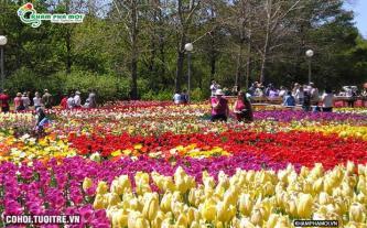 Tour du lịch Đà Lạt - Xứ sở ngàn hoa 2N2Đ