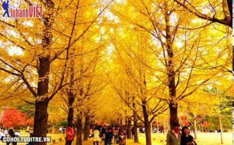 Du lịch Hàn Quốc 5 ngày siêu tiết kiệm