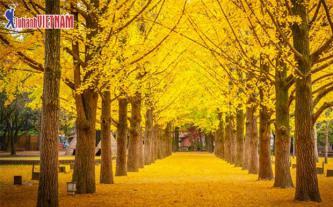 Tour Hàn Quốc bay 5 sao giá trọn gói từ 9,999 triệu đồng