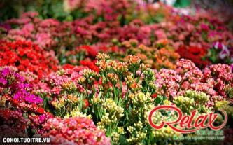 Tour cao cấp độc đáo chào đón Festival hoa Đà Lạt