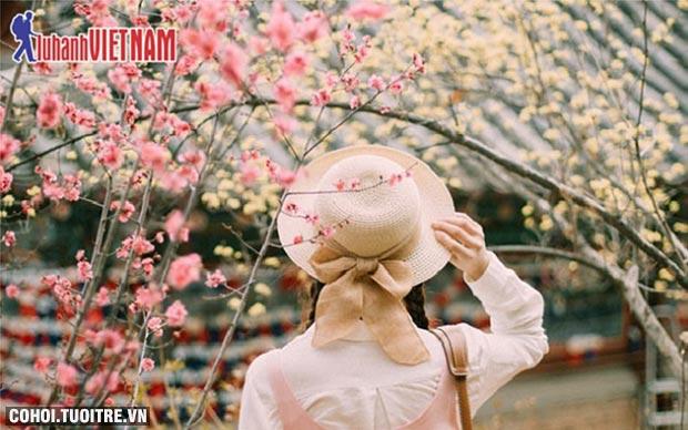 Tour Nhật Bản ngắm hoa anh đào từ 19,9 triệu đồng