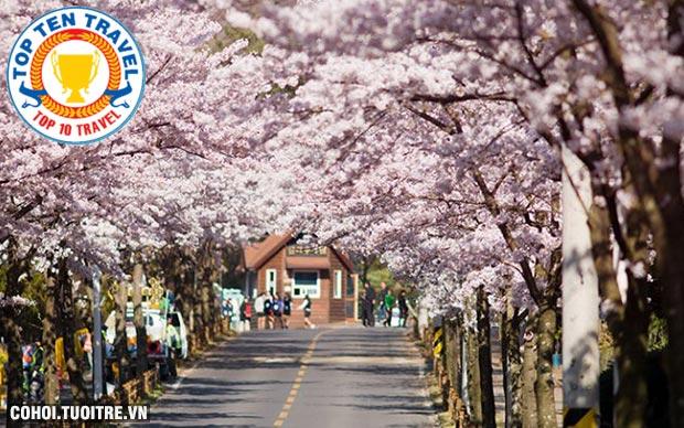Tour Hàn Quốc 5N4Đ trả góp chỉ từ 4.500.000đ
