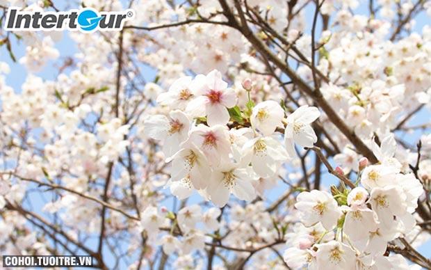 Ba địa danh có hoa anh đào hàng đầu châu Á