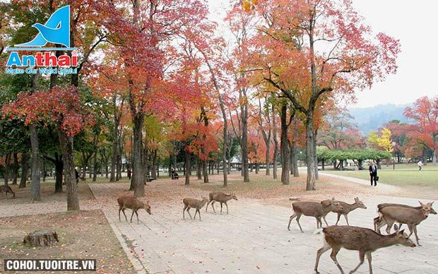Du lịch Nhật Bản 5N4Đ