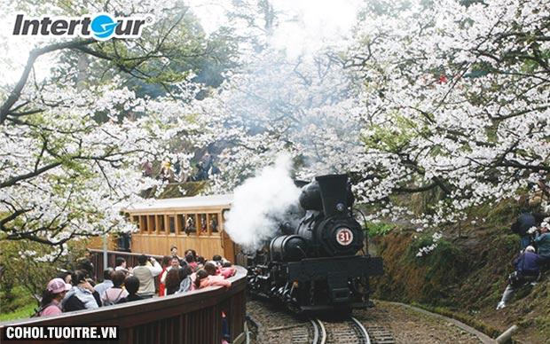 Đài Loan - điểm đến mới ngắm hoa anh đào