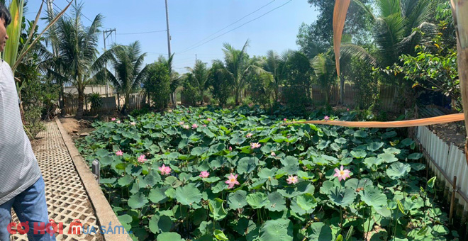 Sang nhà xưởng, vườn cây ở xã Tân Hiệp, H.Hóc Môn, Tp.HCM