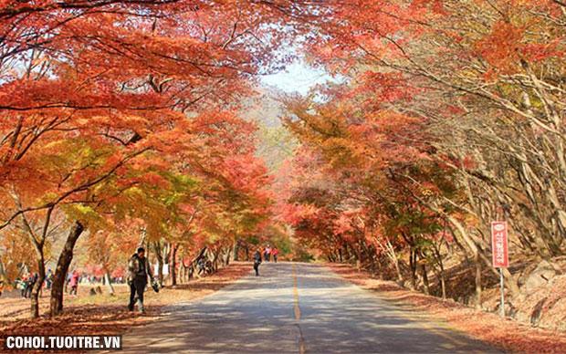 Lời khuyên bổ ích khi chọn tour Hàn Quốc giá rẻ