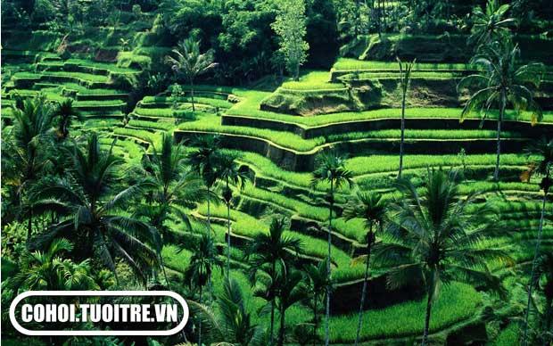 Bali - Denpasar