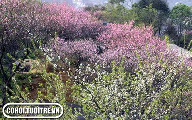 Hành trình khám phá Tây Bắc mùa hoa Tam Giác Mạch 2012